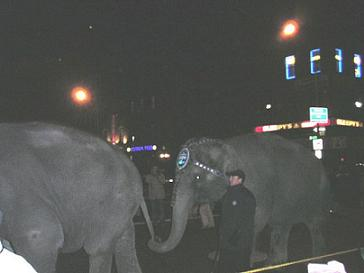 Elephants on 34th St
